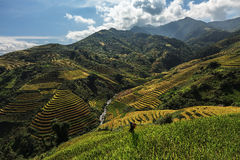 Rice terrace on the moutain in Vietnam. Royalty Free Stock Photos