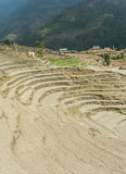 Rice terrace in Nepal Royalty Free Stock Photography