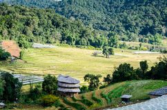 Rice terrace. At the north of Thailand Stock Image
