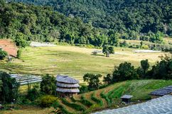 Rice terrace. At the north of Thailand Royalty Free Stock Photography