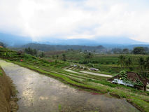 Rice terrace paddy fields with panoramic curve lines view, water. Green rice terrace paddy fields with panoramic curve lines view, water reflection and local Stock Photography