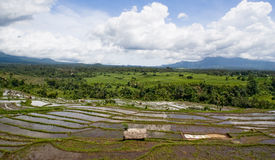 Rice terrace panorama Stock Image