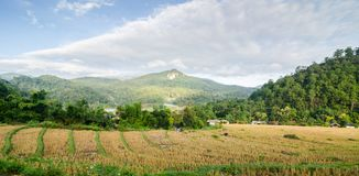 Rice terrace. At the north of Thailand Stock Photography