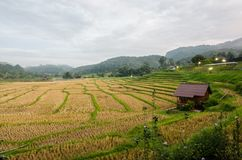 Rice terrace. At the north of Thailand Stock Photo