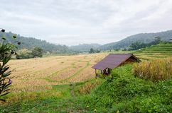 Rice terrace. At the north of Thailand Royalty Free Stock Photo