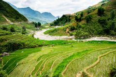 Rice terrace in Sapa Vietnam. View of mountain with rice terrace in Sapa Vietnam royalty free stock images