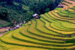 Rice terrace and some small huts in the ladder stock images