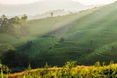 Rice terrace sunlight shine at sunset Stock Photos