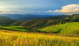 Rice terrace in the sunset time Royalty Free Stock Images