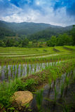 Rice terrace in Thialand. Thailand Rice field terrace in Chiang Mai Province Royalty Free Stock Image