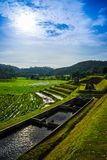 Rice terrace in Thialand Stock Photos