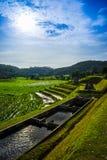Rice terrace in Thialand Stock Photos