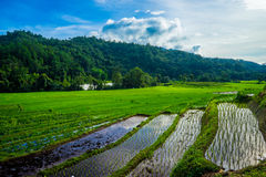 Rice terrace in Thialand Stock Images