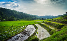 Rice terrace in Thialand Stock Image
