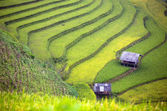 Rice Terrace in Vietnam Royalty Free Stock Photo