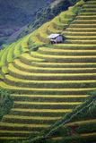 Rice Terrace in Vietnam Stock Photos