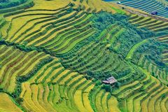 Rice terrace at Vietnam Royalty Free Stock Photography