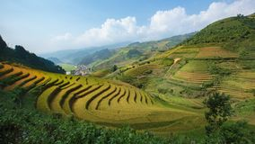 Rice terrace stock video