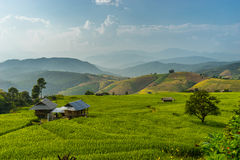 Rice terrace view with small house Stock Photo