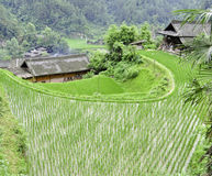 Rice Terrace village Royalty Free Stock Photography