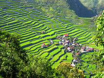 Rice Terrace Village Royalty Free Stock Images