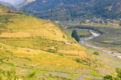 Rice terraced field in early state Royalty Free Stock Images