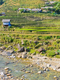 Rice terraced field in hill tribe. Traditional rice terraced fields in Sapa hill tribe, Vietnam royalty free stock photo