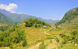 Rice terraced field on Sapa highland Royalty Free Stock Photography