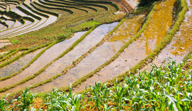 Rice terraced fields Stock Image