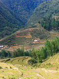Rice terraced fields Royalty Free Stock Photography