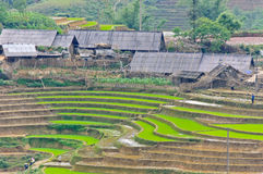 Rice terraced fields in village Royalty Free Stock Image