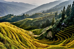 Rice terraced fields Wengjia longji Longsheng Hunan China Royalty Free Stock Image