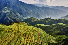 Rice terraced fields Wengjia longji Longsheng Royalty Free Stock Photos