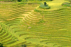 Rice terraced in Northern Vietnam Royalty Free Stock Photo
