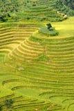 Rice terraced in Northern Vietnam Stock Photo