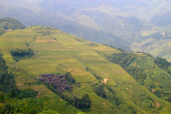 Rice terraced in Northern Vietnam Royalty Free Stock Photography
