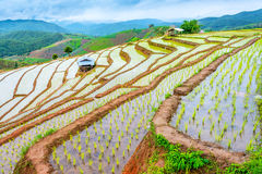 Rice terraced. Stock Images