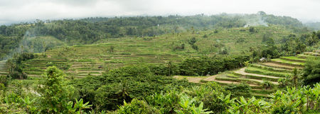 Rice terraced paddy fields in central Bali, Indonesia Stock Photo