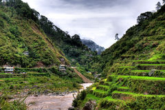 Rice terraces. A beautiful view of Philippine hillside village surrounded by rice terraces Stock Photos