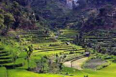 Rice Terraces Stock Image