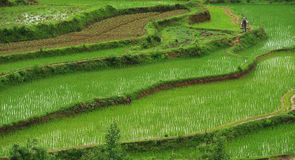 Rice terraces Stock Photos