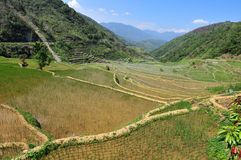 Rice Terraces. A rice terraces in Southeast Asia stock images