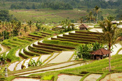 Rice terraces Royalty Free Stock Photos