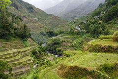 Rice terraces Stock Image