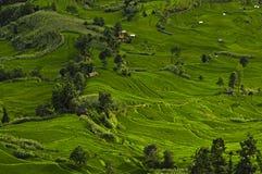 Rice terraces Royalty Free Stock Photo