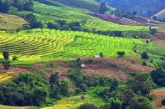 Rice terraces. Stock Photo