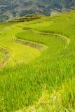 Rice terraces Stock Photos