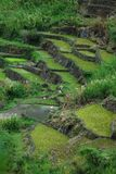 Rice Terraces. Taken from the beautiful place called Sagada stock photography
