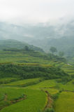 Rice terraces. Landscape from a common rice terrace in china Stock Image