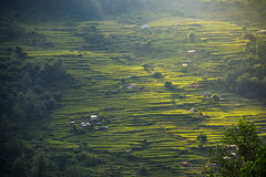 Rice terraces in Annapurna conservation area, Nepal Stock Photos